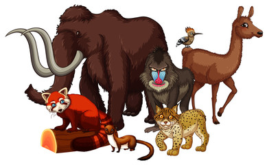Foto op Canvas Kids Isolated picture of wild animals