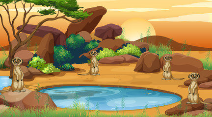 Scene with meerkats in the field