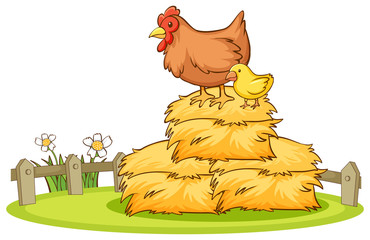 Fond de hotte en verre imprimé Jeunes enfants Isolated picture of chicken on haystack