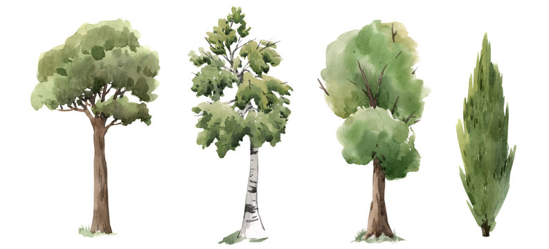 Watercolor tree forest oak fir birch, thuja linden baobab pine isolated illustrations