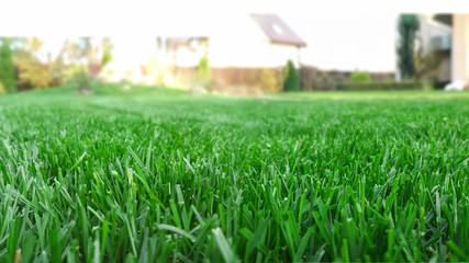 Wall Murals Green Spring season sunny lawn mowing in the garden. Lawn blur with soft light for background.