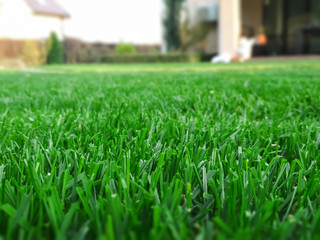 Spring season sunny lawn mowing in the garden. Lawn blur with soft light for background.