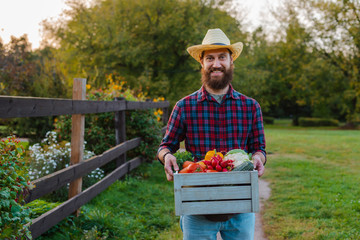 Young 30-35 years old young bearded man male farmer hat with box fresh ecological vegetables garden background sunset.