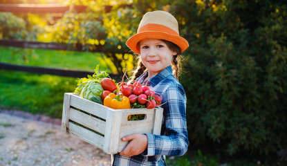 Kids little girl holding a basket of fresh organic vegetables in the background of a home garden at sunset. Healthy family lifestyle. Harvest time in autumn. The child the farmer.