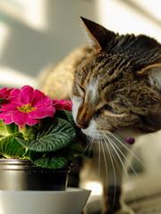 cat eating a flower, danger of poisoning