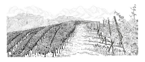 Poster Wit Hill of vineyard landscape with farm on horizont and clouds hand drawn sketch vector illustration isolated on white