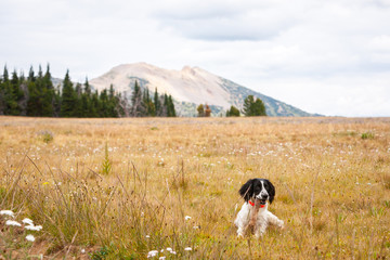 dog in field and grass