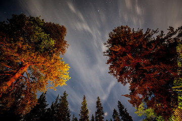 night sky in the forest