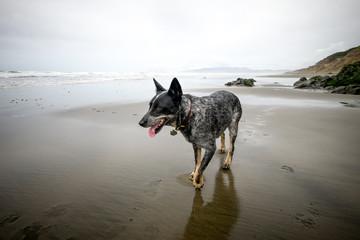 dog on a beach