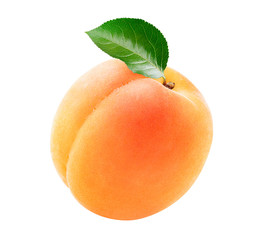 Single fresh apricot with a green leaf isolated on white background