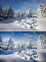 Wall Mural - Beautiful view of fairy-tale woodland. Images before and after.