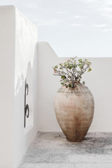 Beautiful vase with flowers shadows on the wall. Creative, minimal, styled concept for bloggers.