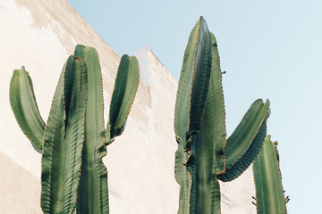 Cactus plant. Creative, minimal, styled concept for bloggers.