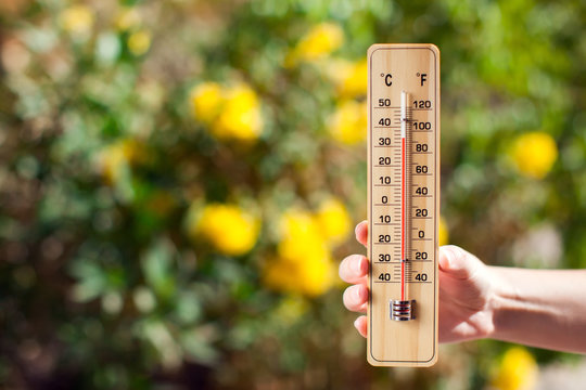 Thermometer beside trees with yellow flowers. Weather forecast and summer concept