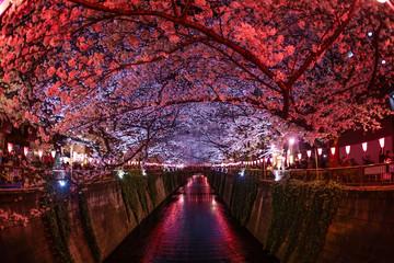 Poster Bordeaux 目黒川の満開の夜桜