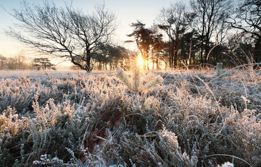 Wall Mural - sunshine over winter meadow