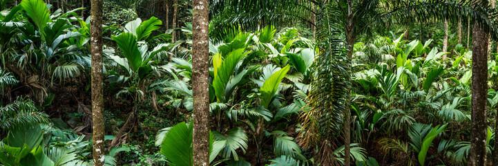 Tropical rain forest panorama