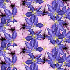 Wall Mural - Beautiful floral background of clematis and petunias. Isolated