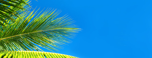 Foto auf Leinwand Palms Coconut palm trees beautiful tropical background. Summer concept.