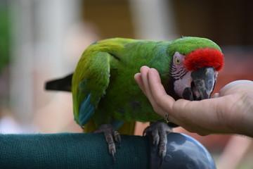 parrot in hand