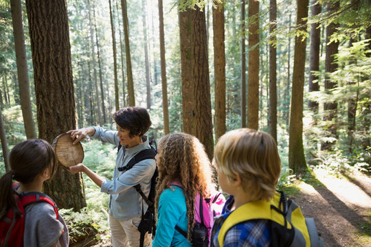 Teacher showing students tree ring in woods