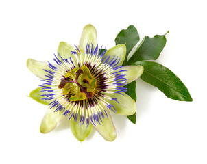 passion flower isolated on white background
