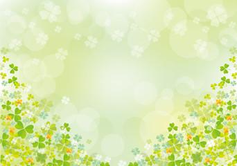 Fototapeta クローバー:春 クローバー 四つ葉 早春 土手 自然 4月 群生 満開 四つ葉のクローバー obraz