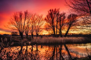 Poster de jardin Corail czerwony ognisty zachód słońca i drzewa bez liści