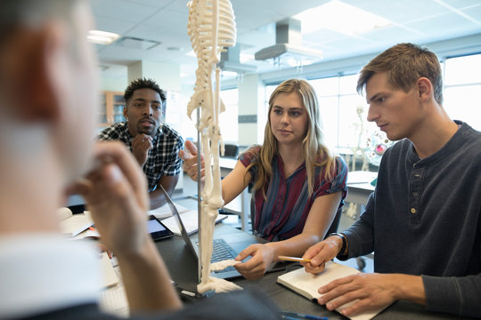 College students examining anatomy skeleton model in laboratory classroom