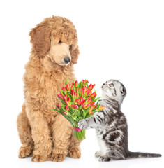 Kitten gives a dog a bouquet of flowers. isolated on white background