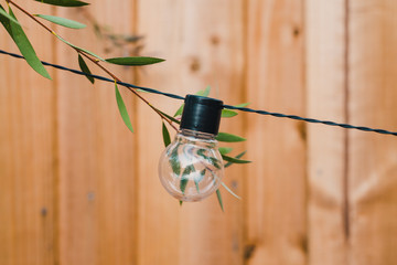string lights with lightbulb shape and tree branches growing towards it in backyard