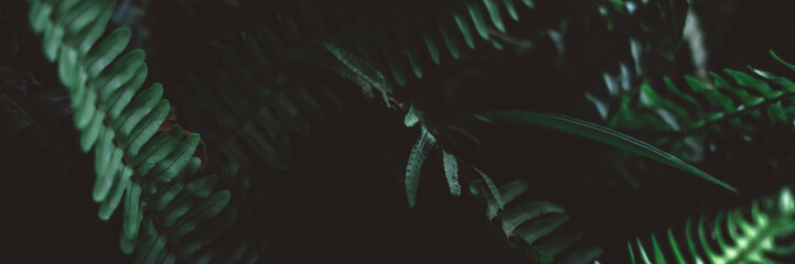 Plant branches with green leaves close up view. Natural environment, ecology, lush forest trees foliage. Beautiful botanical background with copyspace. Illuminated greenery at nighttime Fototapete