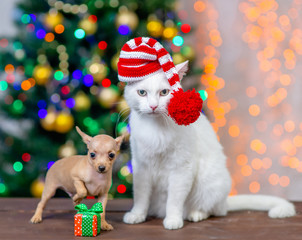 Adult angora cat wearing a red santa hat sits with tiny toy terrier puppy with Christmas tree on background