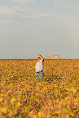 Farmer standing in a field examining soybean crop before harvesting.