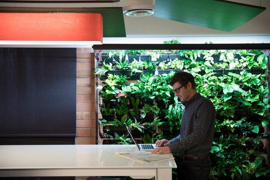 Businessman working at laptop next to indoor wall garden in office
