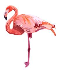 Pink flamingo illustration isolated on white background.