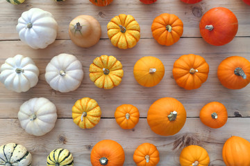Colorful pumpkins and squashes collection.