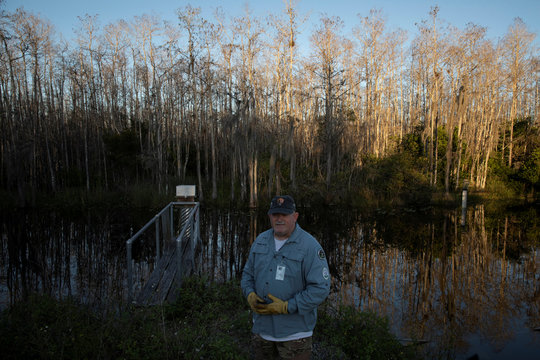 Thomas Aycock explores the Everglades' swamps and sawgrass as he hunts Burmese pythons near Ochopee
