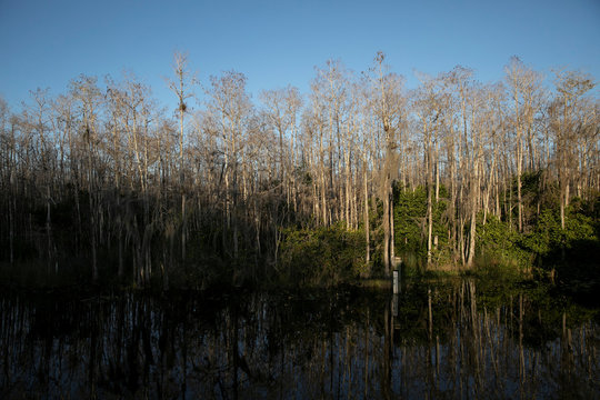 A view of the Everglades' swamps during the 2020 Python Challenge Python Bowl in Big Cypress National Preserve near Ochopee