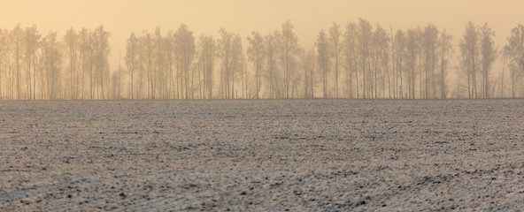 Printed kitchen splashbacks Beige Trees in the snow and fog at dawn