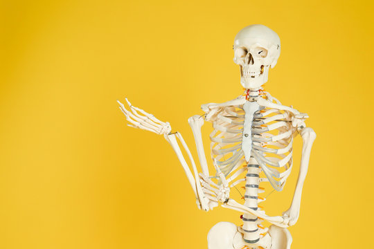Artificial human skeleton model on yellow background. Space for text