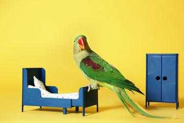Beautiful Alexandrine Parakeet in toy bedroom on yellow background