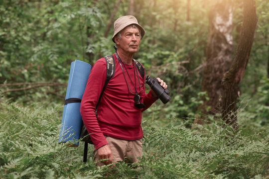 Picture of senior man looking aside attentively, wandering in forest, enjoying beautiful nature, having backpack and sleeping pad at his back, male spending time in open air. Traveling concept.