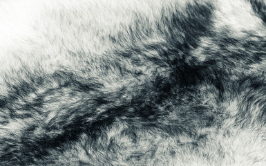 White wolf fur. A close-up. Art photo. The photo is toned.