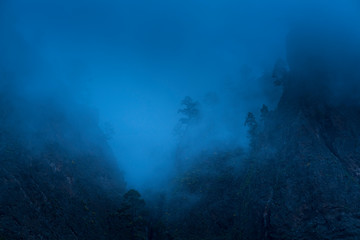 Fotobehang Canarische Eilanden Roque, Fog and Canary Island pine forest, La Cumbrecita, Caldera de Taburiente National Park, Island of La Palma, Canary Islands, Spain, Europe