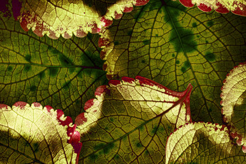 red leaves in the detail - macro picture