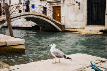 selective focus of seagull and bridge above canal on background in Venice, Italy