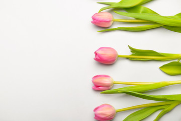 Beautiful flowers on light background