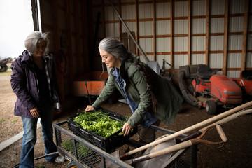 Female farmers with harvested vegetables in barn doorway