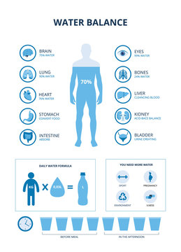 Water balance set with body and organs icons, vector illustration isolated.